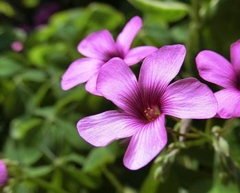 CIMG0152-2.jpg